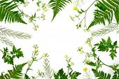 Herbal Botany Decorative Background, Flat Lay Composition, Space For A Text poster