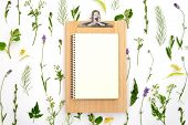 Herbal Botany Decorative Background With Paper Note, Flat Lay Composition, Space For A Text poster