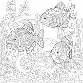 Piranhas. South American Freshwater Predatory Fishes. Coloring Page. Colouring Picture. Adult Colori poster