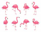 Exotic Pink Flamingos Birds. Flamingo With Rose Feathers Stand On One Leg In Wild African Fauna. Zoo poster