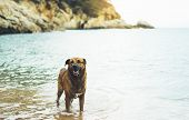 Big Dog Is Swimming In The Sea On A Background Of Water In Nature On The Coast In Summer Enjoying Li poster