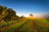 Foggy Sunny Morning On The Summer Field. Misty Panorama. poster