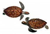 stock photo of sea-turtles  - isolated sea turtles - JPG
