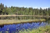 Small Marshland Lake In Finland