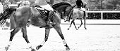 Beautiful Girl On Sorrel Horse In Jumping Show, Equestrian Sports, Black Abd White. Light-brown Hors poster