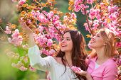 Cherry Blossom Events And Locations. Womens Day, 8 March. Two Happy Girls With Blossom Sakura Cherry poster