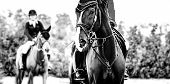 Black Dressage Horse And Rider In Uniform Performing Jump At Show Jumping Competition, Black And Whi poster