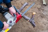 Garden Work. A Man Is Sawing A Fallen Tree With An Electric Chain Saw poster