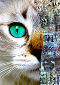 Mixed Media Art Collage. Close Up View Of Cat With Green Eyes. Cut Portrait On Newspaper Paper Print poster