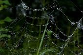 Spider-web With Dew