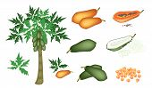stock photo of papaya  - Fresh Fruits An Illustration Collection of A Fresh Ripe and Unripe Papayas Slices Papaya Papaya Chunks and Papaya Tree - JPG