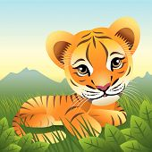 baby Animal Sammlung: Tiger