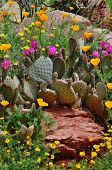 stock photo of cactus  - Yellow wildflowers surrounding a saguaro cactus with red blooms atop a large desert rock - JPG