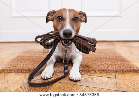 Dog Leather Leash poster