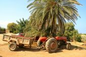 Tractor Under Palm Tree
