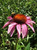 Bee Flower