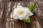 white gardenia on mat