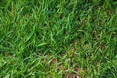 grass green natural background natural grass in spring