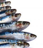 Sardines On White2