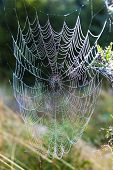 spider web on meadow