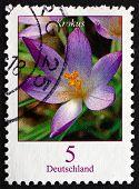 Postage Stamp Germany 2005 Crocus, Flowering Plant