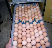Egg Rack Too