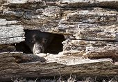 picture of hollow log  - Young - JPG