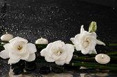Three gardenia flower with thin bamboo grove on wet background