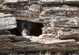 image of hollow log  - Young - JPG