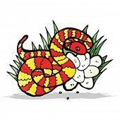 snake on nest of eggs