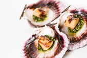 image of scallop shell  - Studio closeup of seared scallops garnished with pea shoots and served on a bed of green and purple curly lettuces presented on a scallop shell - JPG