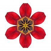 Red Kaleidoscopic Lily Flower Mandala  Isolated On White