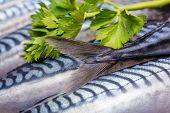 Fresh Fish Mackerels