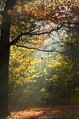 Sun Light Lit Glade In Autumn Forest