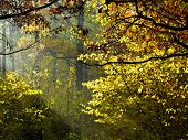 Sun Rays Through Foliage In Autumn