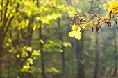 Twig And Leaf Fall In Forest