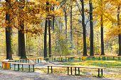 Garden Benches In Yellow Forest In Autumn