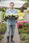 Full-length portrait of gardener carrying crate with flower pots in greenhouse