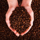 Coffee Beans Pouring Out Of Cupped Hands