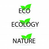 Eco Sign With Green Leaf Vector Illustration