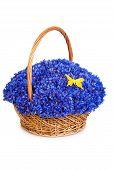 Beautiful Blue Cornflowers In A Basket