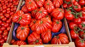 Tomatoes for sale at market