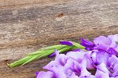 foto of gladiolus  - fresh blue gladiolus flower close up on wooden table - JPG