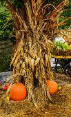 Stalks and Pumpkins