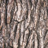 Abstract Pattern Of Bark On Old Pine Tree