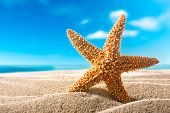 beautiful  fishstar on the sandy beach. Holiday concept