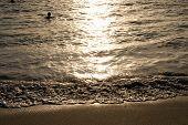 tropical sea wave