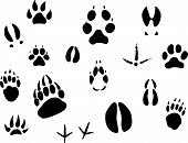stock photo of paw-print  - Set of animal footprints for ecology design - JPG