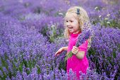 picture of lavender field  - happy little girl in a field holding a bouquet of lavender - JPG