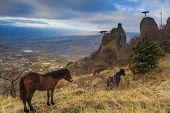 stock photo of feeding horse  - Wild horses grazing in the Crimean mountains - JPG